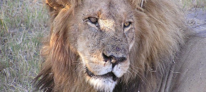 The Cecil the Lion Scam – Shame on the World